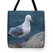 Seagull Tote Bag by Sebastian Musial