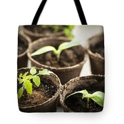 Seedlings  Tote Bag by Elena Elisseeva