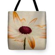 Senetti Pericallis Orange Tip Tote Bag by John Edwards