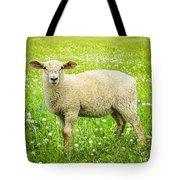Sheep In Summer Meadow Tote Bag by Elena Elisseeva