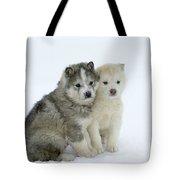 Siberian Husky Puppies Tote Bag by M. Watson