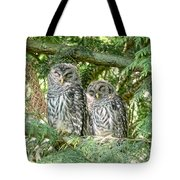 Sleeping Barred Owlets Tote Bag by Jennie Marie Schell