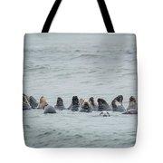 Sleeping Seals Tote Bag by Bill Wakeley