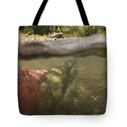 Spawned Out Sockeye Salmon In Quartz Tote Bag by Scott Dickerson