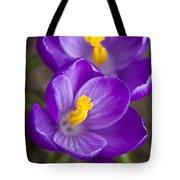 Spring Crocus Tote Bag by Adam Romanowicz