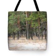 Spring In Pinery Tote Bag by Evgeny Pisarev