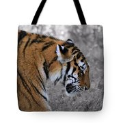 Stalking Tiger Tote Bag by Dan Sproul