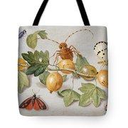Still Life Of Branch Of Gooseberries Tote Bag by Jan Van Kessel