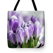 Striped Purple Crocuses In The Snow Tote Bag by Sharon Talson