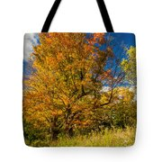 Sugar Maple 3 Tote Bag by Steve Harrington
