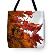 Sugar Maple Study Tote Bag by Pamela Patch