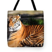 Sumatran Tiger 5D27142 Tote Bag by Wingsdomain Art and Photography