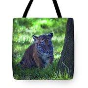 Sumatran Tiger Cub Tote Bag by Garry Gay