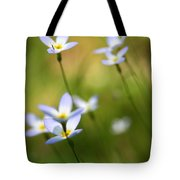 Sun Searching  Tote Bag by Neal  Eslinger