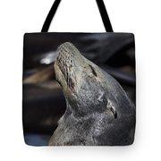 Sun Soaker V2 Tote Bag by Douglas Barnard