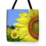 Sunflower In Sunflower Field Tote Bag by Elena Elisseeva