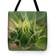 Sunflower Pod Tote Bag by Kerri Mortenson