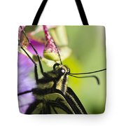 Swallowtail Butterfly Tote Bag by Priya Ghose