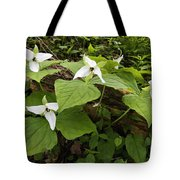 Sweet White Trillium - D003800 Tote Bag by Daniel Dempster