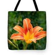 Tangerine Lily Tote Bag by Will Borden