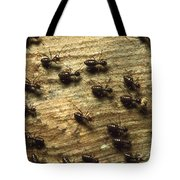 Termites On Wood With One Carrying Tote Bag by Konrad Wothe