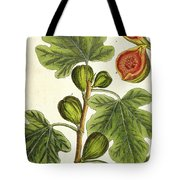 The Fig Tree Tote Bag by Elizabeth Blackwell