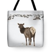 The Gathering Tote Bag by Sandra Bronstein
