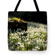 The Stump And The Snowdrops Tote Bag by Anne Gilbert