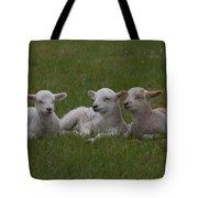 Three Lambs Tote Bag by Richard Baker
