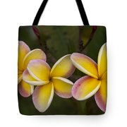 Three Pink And Yellow Plumeria Flowers - Hawaii Tote Bag by Brian Harig