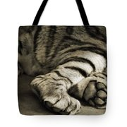 Tiger Paws Tote Bag by Dan Sproul
