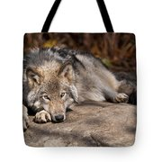 Timber Wolf Pictures 945 Tote Bag by World Wildlife Photography