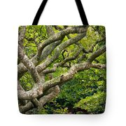 Tree #1 Tote Bag by Stuart Litoff