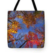 Treetops in fall forest Tote Bag by Elena Elisseeva