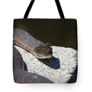 Two Creeps Tote Bag by Karol  Livote