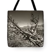 Uprooted - Bryce Canyon Sepia Tote Bag by Tammy Wetzel