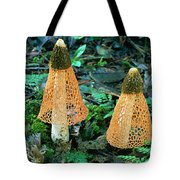 Veiled Lady Mushrooms Tote Bag by Glen Threlfo