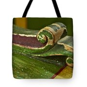 Victorian Curves Tote Bag by Gwyn Newcombe