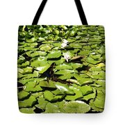 Water Lillies Tote Bag by Les Cunliffe