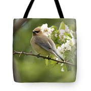 Waxwing In A Dream Tote Bag by Penny Meyers
