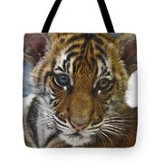 What A Face D3875 Tote Bag by Wes and Dotty Weber