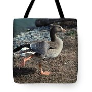 WHITE FRONTED GOOSE Tote Bag by Skip Willits