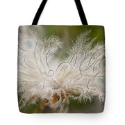 White Seedhad of Mountain Avens Tote Bag by Heiko Koehrer-Wagner