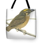White Throated Spadebill Tote Bag by Anonymous