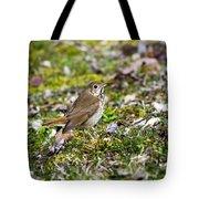 Wild Birds Hermit Thrush Tote Bag by Christina Rollo