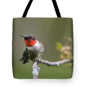 Wild Birds - Ruby-throated Hummingbird Tote Bag by Christina Rollo