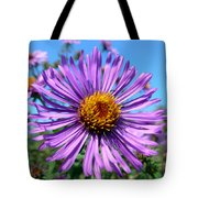 Wild Purple Aster Tote Bag by Christina Rollo
