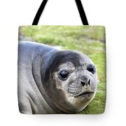 Woeful Weaner Tote Bag by Ginny Barklow