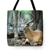 Young Buck At Rest Tote Bag by Paul Ward