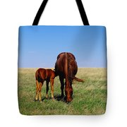 Young Colt And Mother Tote Bag by Jeff Swan